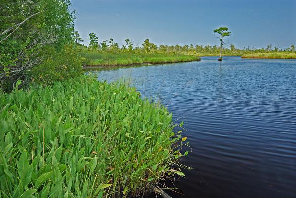 Wetland Conservation Term paper