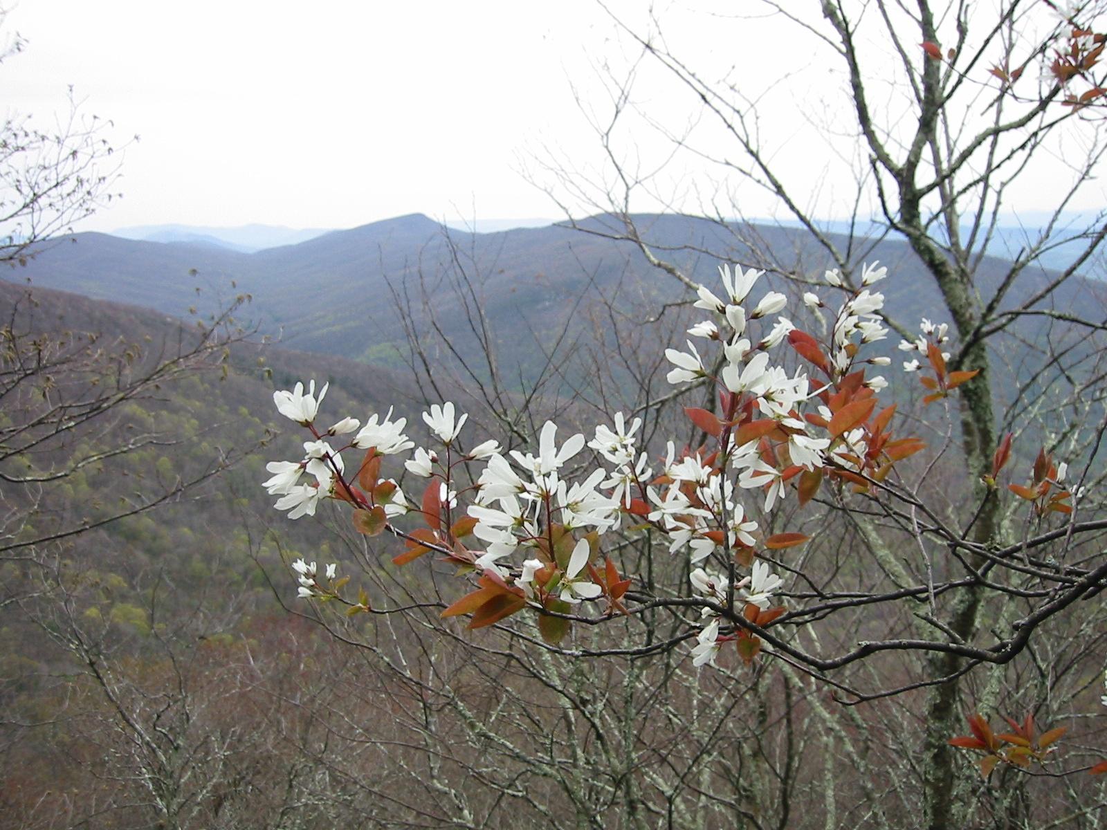 Native Plants For Conservation Restoration And Landscaping