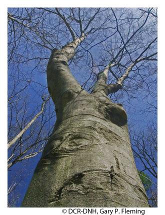Northern Hardwood Forests