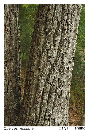 Acidic Oak Hickory Forests